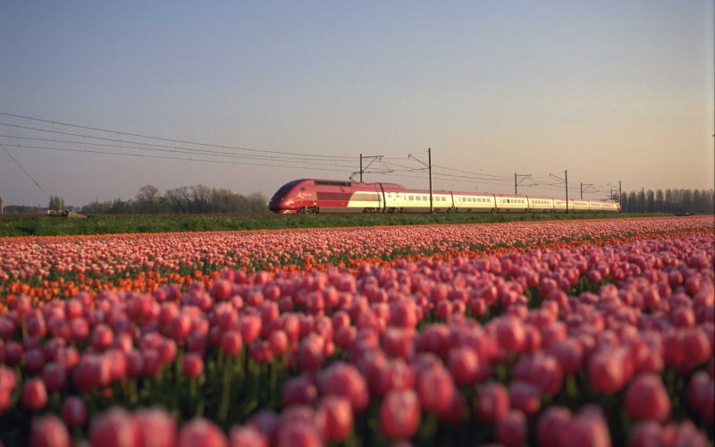 Trains to & from Amsterdam - Thalys in The Netherlands