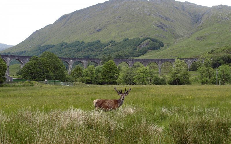 Trains to & from Fort William | Glennfinnan Viaduct