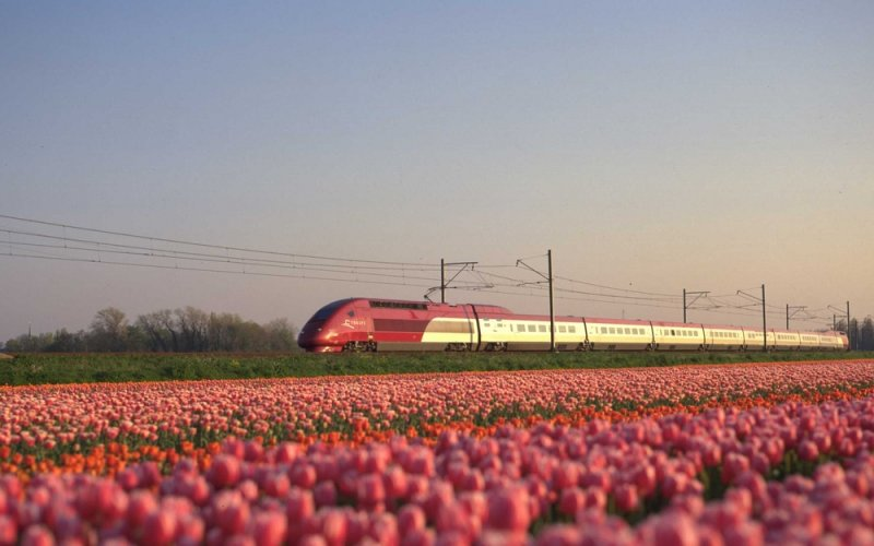 Trains Brussel Centraal (Old City Centre, Altstadt, Oude Binnenstad)  to Amsterdam Centraal (Main station)  - Exterior Thalys, driving through tulip fields
